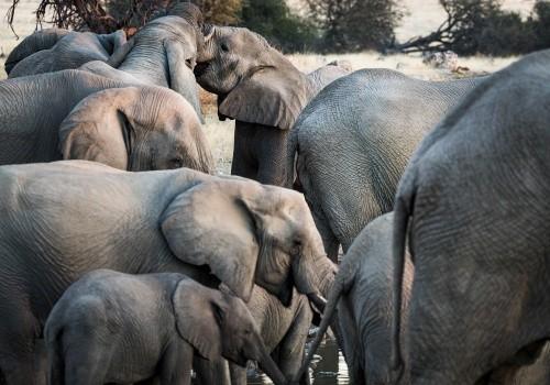 3 Day - Etosha Wildlife Safari Cover