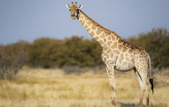 Windhoek Game Drive and City Tour