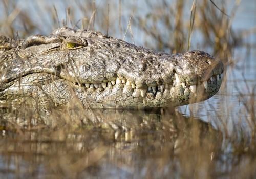 6 Day - Safari In Botswana Cover
