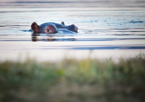 12 Day - Etosha, Chobe & Victoria Falls Cover